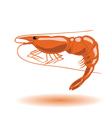 orange shrimp vector image