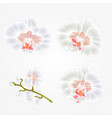 orchid phalaenopsis white flowers tropical plants vector image