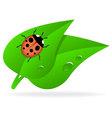 Ladybug on green leaf vector image vector image