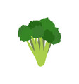 broccoli isolated greens on white background vector image