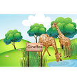 Two giraffes at the forest with a wooden sign vector image
