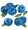 blueberries with leaves vector image