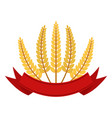 Bunch of wheat with ribbon frame flat style vector image