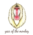 Face of baboon monkey vector image