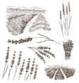 Hand drawn lavander flowers set vector image