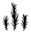 Rosemary herbs isolated on white vector image vector image