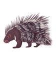 porcupine isolated vector image