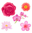 amazing pink flowers isolated set vector image