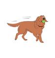 labrador retriever dog breed vintage vector image