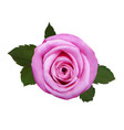 realistic rose vector image