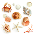 Seashells set icons vector image