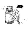 sage essential oil bottle and sage leaves hand vector image