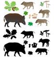 wild pig with cubs vector image