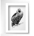 artwork of griffon vulture Aegypius monachus vector image