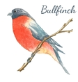 The bullfinch sits on the tree branch vector image