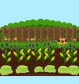 corn harvest garden countryside vector image