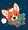 cute corgi dog in santa hat with christmas tree vector image