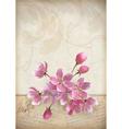 Realistic cherry blossom flower arrangement vector image vector image