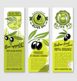 banners of olives and italian olive oil vector image