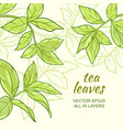 tea leaves background vector image