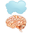speech bubble template with human brain vector image
