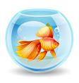 goldfish in an aquarium vector image