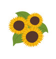 sunflowers with green leaves vector image