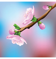 Flower on branch vector image vector image