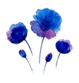 Watercolor poppies vector image