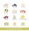 Beans and legumes Set vector image