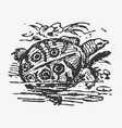 engraving nile turtle trionyx triunguis vector image