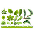 different types of green leaves and grass vector image