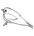 swallow symbol of springtime vector image