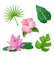 tropical flowers and leaves for decoration vector image
