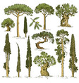 big set of engraved hand drawn trees include pine vector image