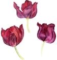 watercolor pink tulip vector image
