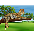 A leopard lying above the branch of a tree vector image
