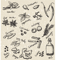 set of spices and herbs vector image