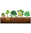 Many kinds of vegetables planting on ground vector image vector image