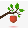 red apple and branch of tree with green leaves vector image