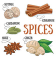 Spices vector image