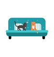 cute black and red cats sitting on a turquoise vector image