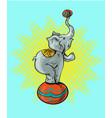 circus elephant cartoon icon vector image