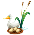 A duck beside the nest vector image