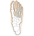 bones of a human foot vector image