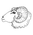 ram domestic animal vector image