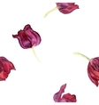 seamless pattern with watercolor red tulip vector image