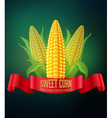 background with cobs of corn and red ribbon vector image