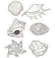 Set of hand drawn sea shells vector image