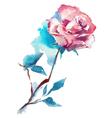rose watercolor sketch vector image vector image